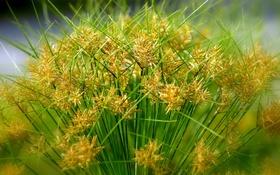 Обои растение, трава, макро