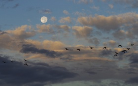 Картинка небо, облака, птицы, луна