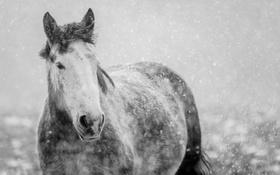 Обои зима, снег, природа, конь