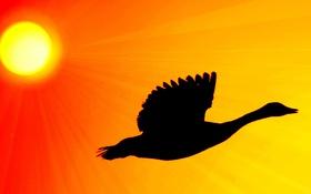 Обои солнце, свет, птица, силуэт, зарево