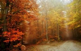 Обои осень, лес, туман, дороги