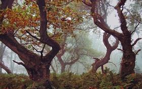 Картинка осень, лес, деревья, ветки, туман, кусты