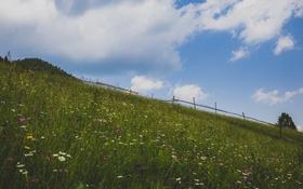 Картинка поле, небо, трава, облака, цветы, дерево, забор