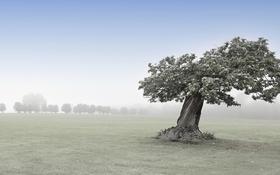 Картинка дерево, природа, поле