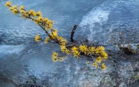 Обои лед, зима, река, ветка