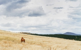 Обои sky, field, clouds, fence, hill, horse, countryside