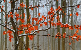Картинка осень, лес, листья, снег