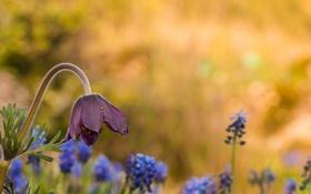 Обои цветок, цветы, блики, весна