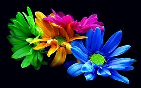 Обои цветы, букет, хризантемы, фильтр