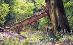Картинка деревья, цветы, дерево, леса