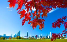 Обои осень, небо, листья, город, дома, Чикаго, США