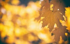 Обои листья, осень, природа