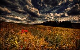 Обои trees, field, clouds, grasslands