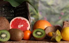 Обои лимон, кокос, киви, фрукты, грейпфрут