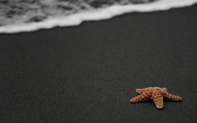 Обои море, берег, звезда