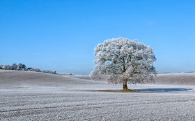 Картинка иней, дерево, холмы, поля