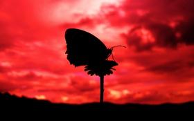 Обои силуэт, вечер, бабочка, облака, небо, цветок