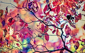 Обои листья, макро, приророда