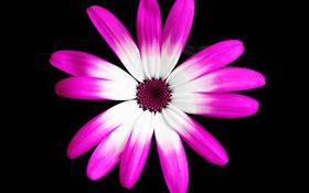 Обои цветок, краски, лепестки, фон