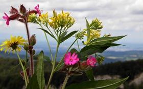 Картинка небо, листья, облака, макро, цветы, горы, растение