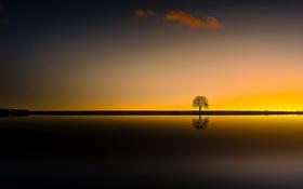 Картинка цвет, дерево, закат