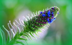 Обои растение, цветок, стебель, природа
