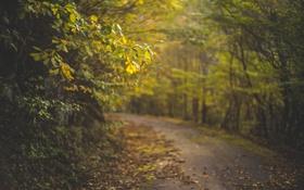 Обои листья, осень, деревья, дорога, солнечный свет