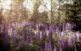 Обои природа, лес, цветы