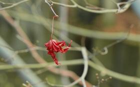 Обои осень, природа, лист