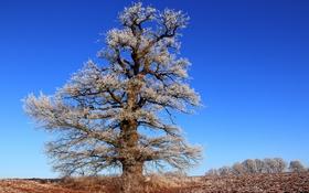 Обои дерево, иней, небо, поле