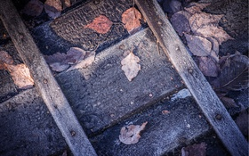Обои leaves, boat, Frost Triptych