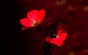 Картинка цветы, фон, растение, лепестки