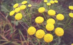Картинка капли, цветы, паутина