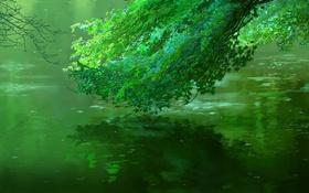 Картинка вода, зеленый, пруд, дождь, ветка, Макото Синкай, Сад изящных слов