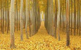 Обои осень, лес, листья, путь, ветви