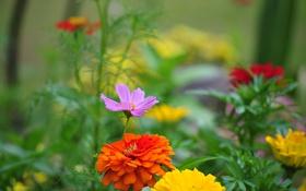 Картинка трава, цветы, парк, лепестки, сад, двор
