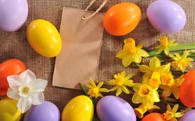 Обои цветы, яйца, Пасха, flowers, нарциссы, spring, Easter