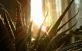 Картинка рассвет, растение, утро