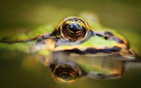 Картинка глаза, вода, лягушка