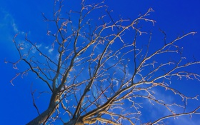 Картинка небо, облака, деревья, ветки