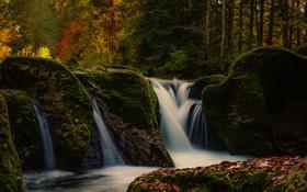 Картинка лес, листья, деревья, скалы, слизь, каскады