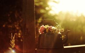 Обои макро, цветы, фото, чайник, боке