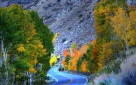 Картинка дорога, осень, деревья, горы, Калифорния, США, Eastern Sierra
