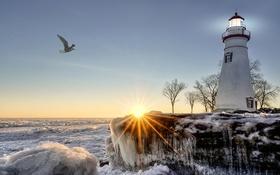 Обои лучи, лед, зима, деревья, чайка, побережье, море