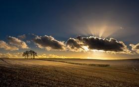 Обои поле, свет, утро, дерево