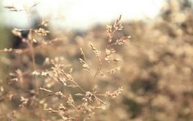 Картинка трава, макро, легкость