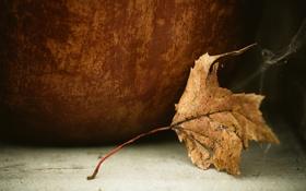 Обои лист, осень, природа