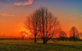 Картинка поле, небо, солнце, деревья, закат