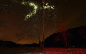 Картинка небо, звезды, свет, снег, деревья, горы, ночь