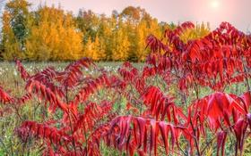 Картинка осень, небо, трава, листья, деревья, багрянец